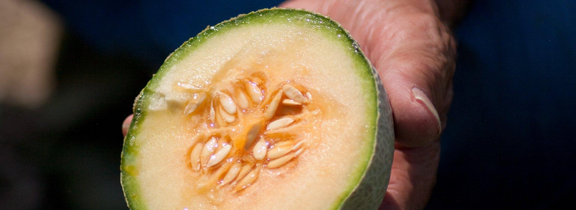 Immagine del melone