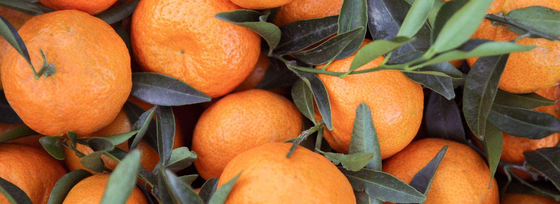 Italian Sicilian tangerines