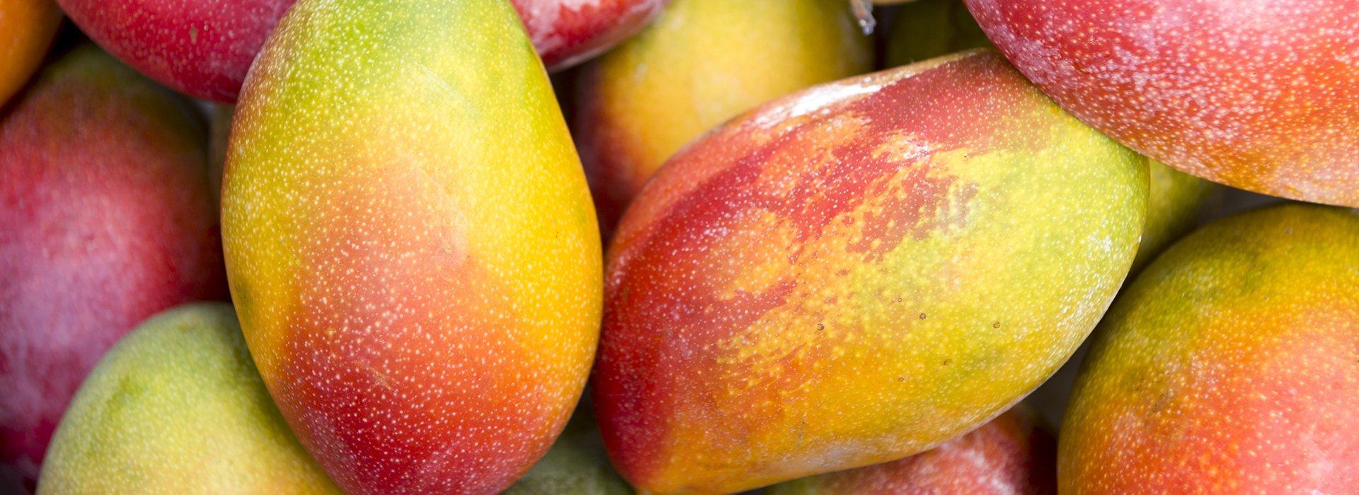 Photo of mangoes, ingredient of Grom ice cream